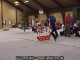 Black Jack jumps 85 cm. (~ 33.5 inches) in high jump at Danish Championship 2002 (the winning jump).