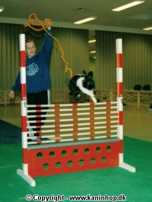 "High jump at Danish Championship 1998, Maria and ""Yabo"" here make 70 cm. (27.6 inches). They won at 92,5 cm. (36.4 inch.)."