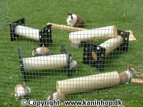 Click to see pictures of our young rabbits from April 2003 (text in Danish).