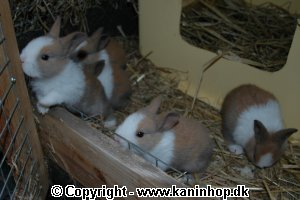 Click here to see the pictures from our young rabbits in 2005 (text in Danish).